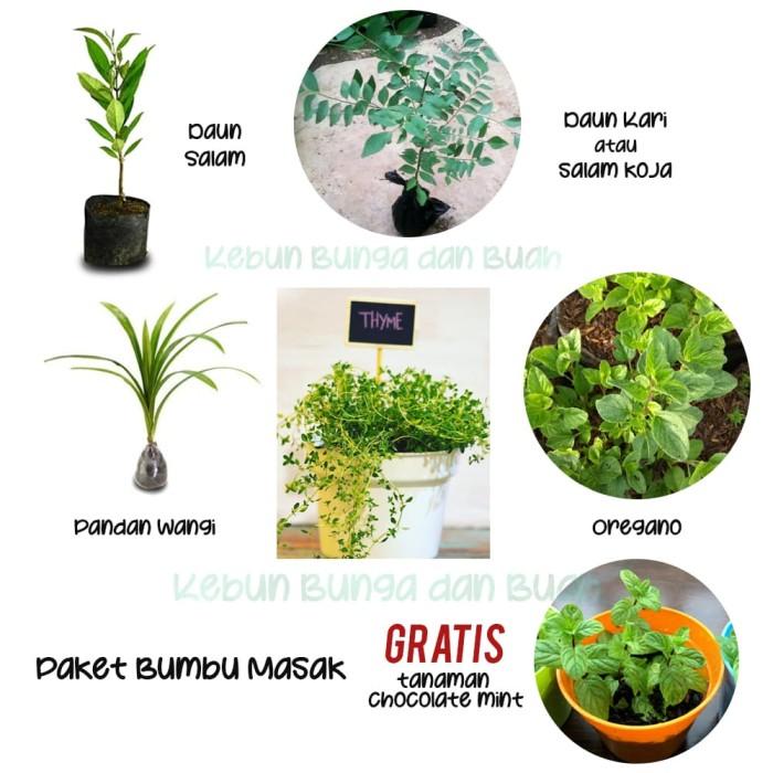 Foto Produk Paket Tanaman Bumbu Masak dari Kebun Bunga dan Buah