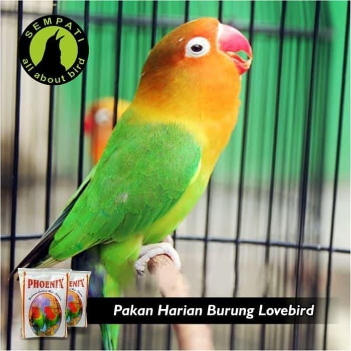 PAKAN BURUNG LOVEBIRD MULTIVITAMIN PHOENIX