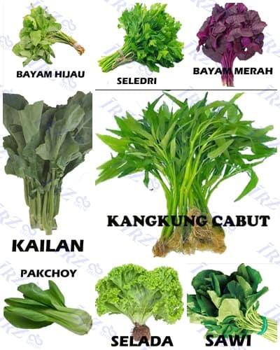 Paket Benih Sayuran Daun