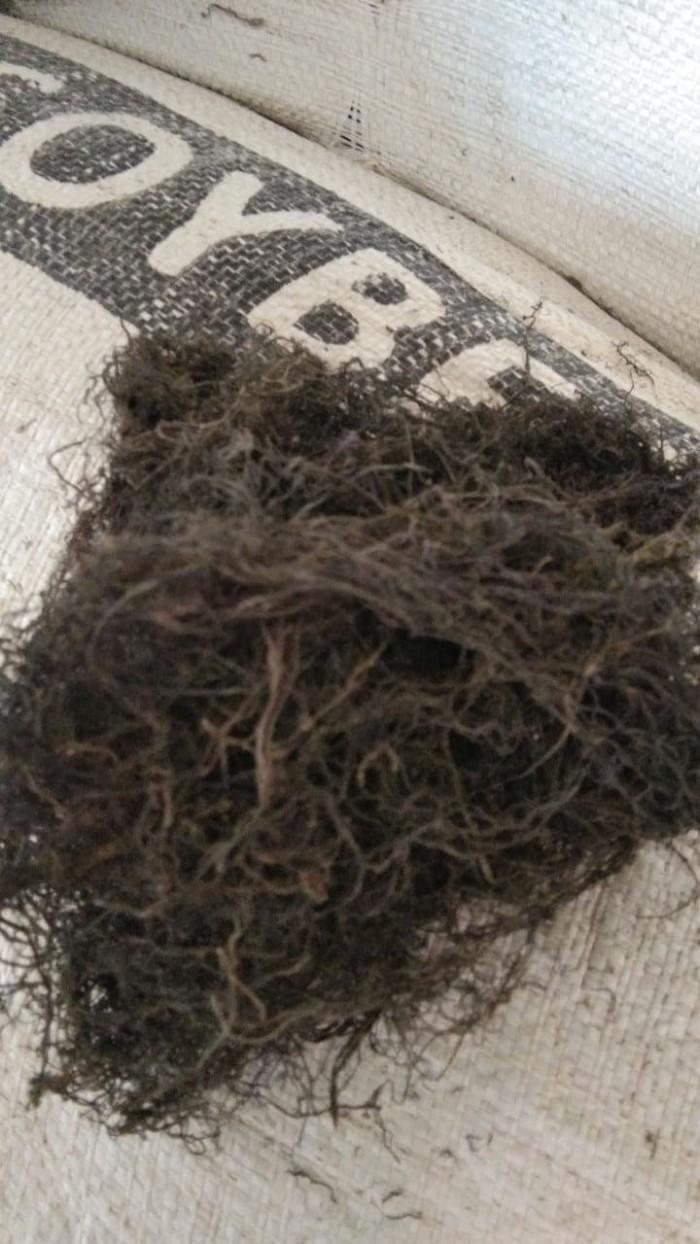 Jual Rumput Laut Gracilaria Kering Kadar Air 15 S D 16 % 1kg Kab Bekasi D A N
