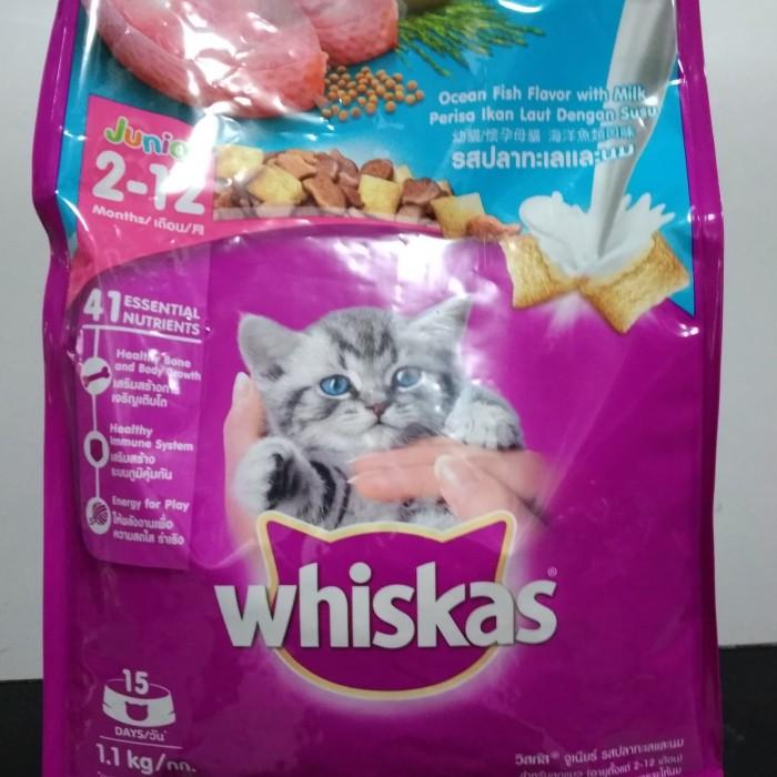 Jual Makanan Anak Kucing Whiskas Junior Ocean Fish 1 1 Kg Dryfood