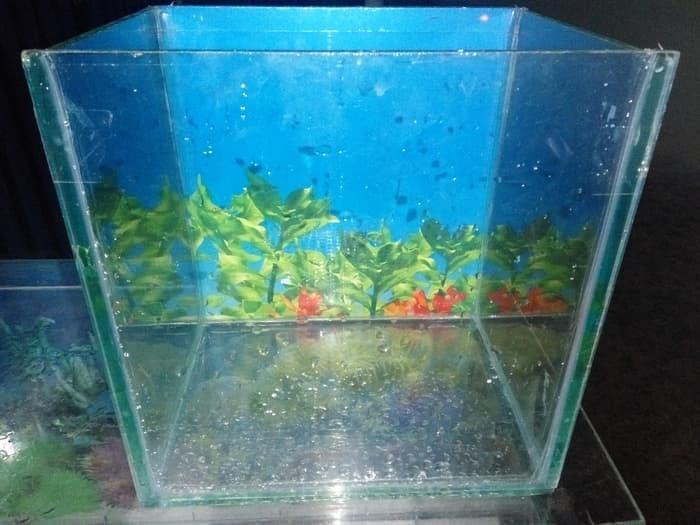 Jual Aquarium Ikan Hias Mini Cocok Untuk Ikan Cupang Giant Kota Kediri Hrdshopei Tokopedia