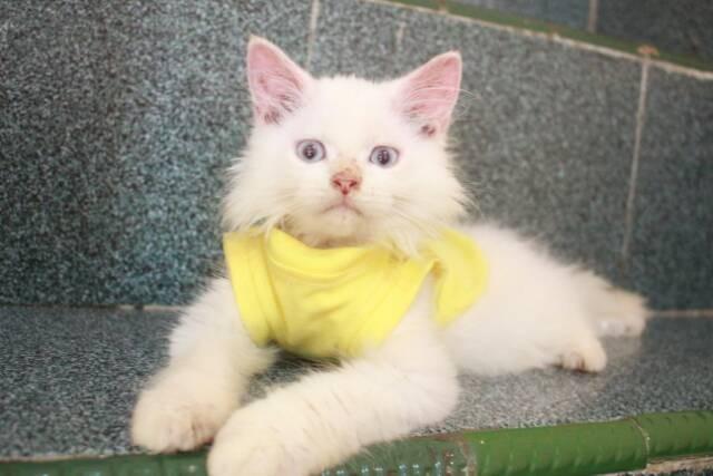 Download 98+  Gambar Kucing Warna Kuning Terbaik HD