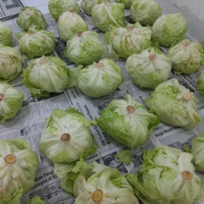 Foto Produk Letus Letuce per 1kg di Bogor dari djafafood pedia