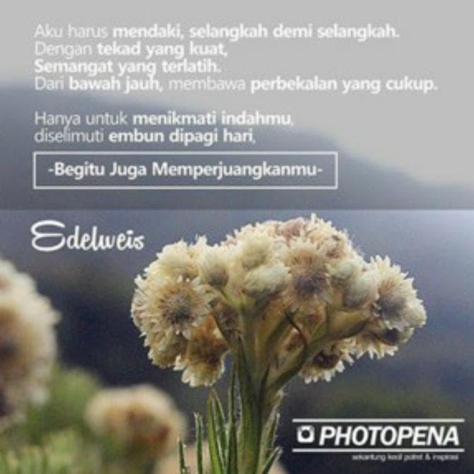 4000+ Wallpaper Bunga Edelweis  Terbaru