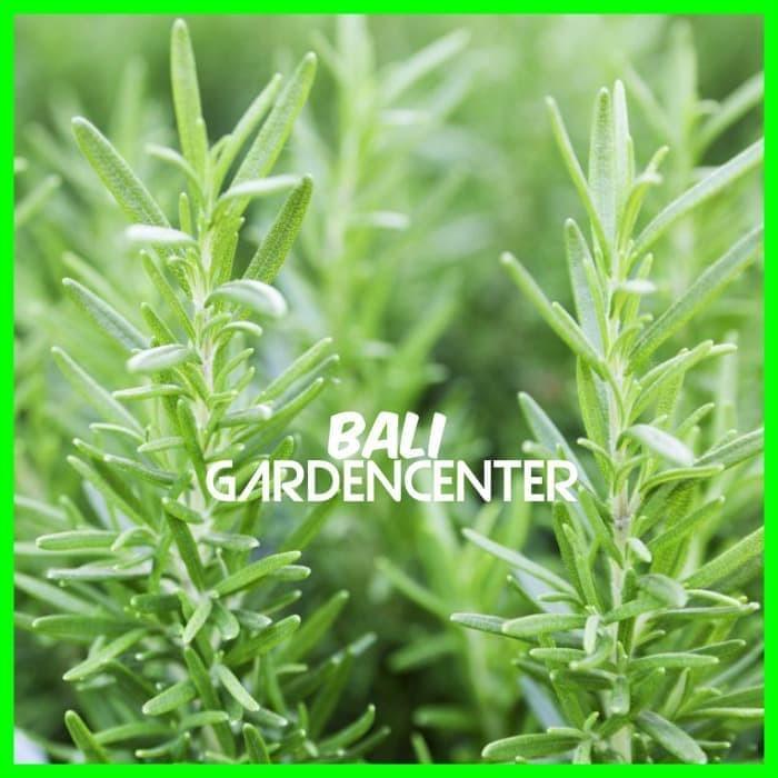 Bibit Biji Benih Bunga Cornflower Tall Mixed. Source · [5] Benih Mr. Fothergill's Rosemary IMPORT ...