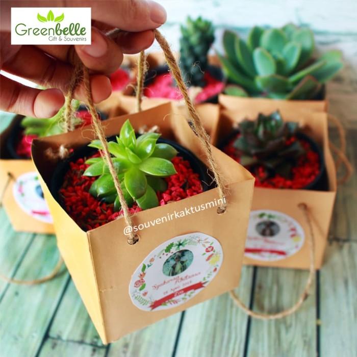 Jual Sukulen Pot Hitam Paperbag 8 Cm Souvenir Pernikahan Kaktus Mini Kota Bogor Greenbelle Tokopedia