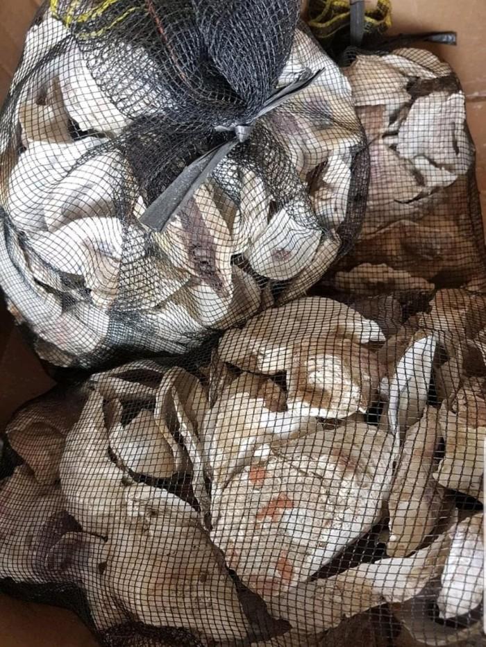 Ternama Kulit Kerang Tiram Kulit Oyster untuk PH Buffer Oyster Cell