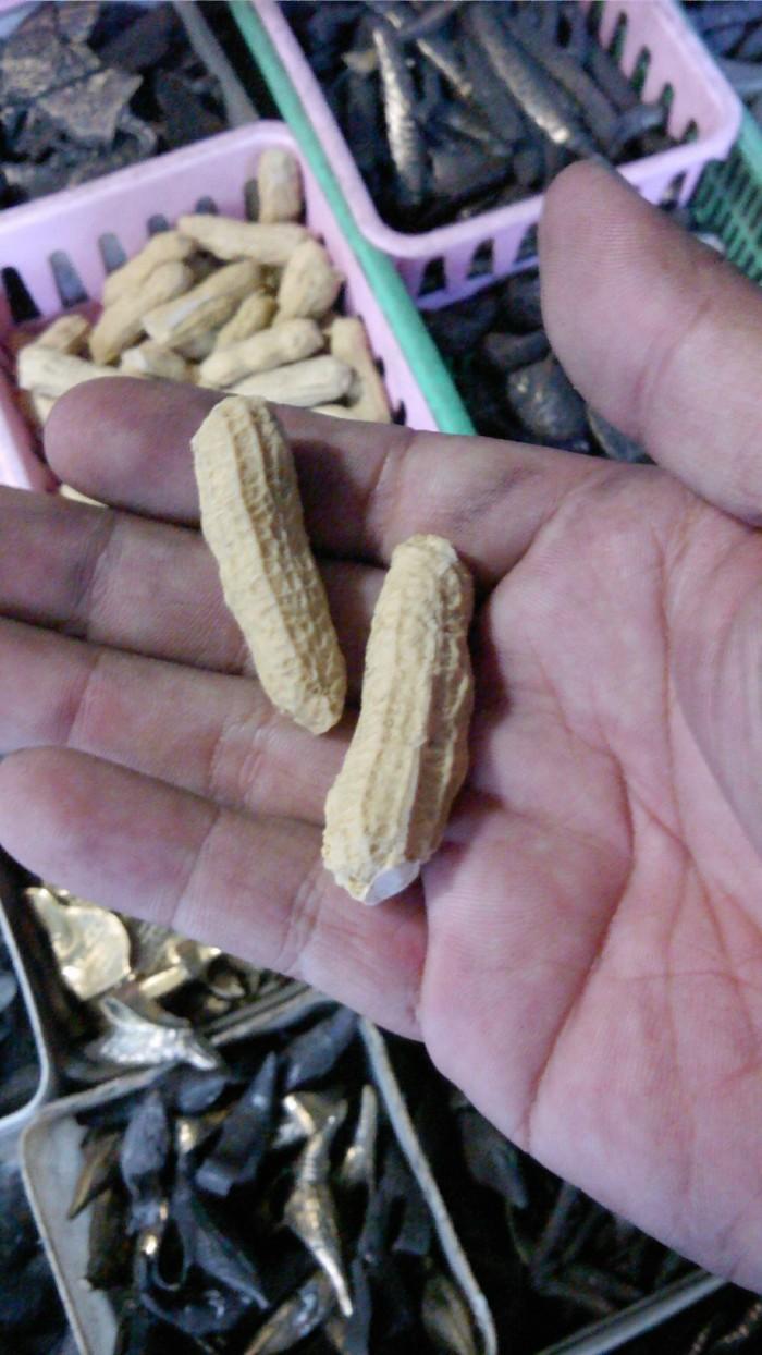Jual Fosil Kacang Sangiran Harga Dua Buah Kota Semarang Nadin Khoirunnisa