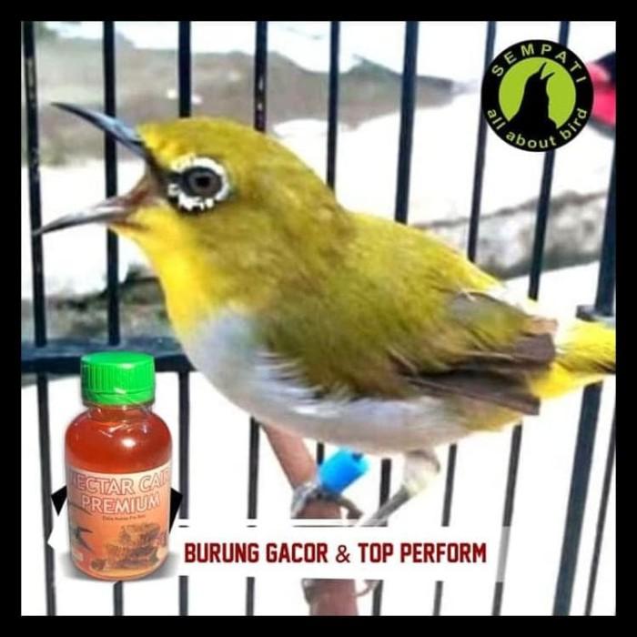 Jual Nectar Nektar Cair Premium Sempati Vitamin Burung Pleci Kolibri Gacor Kab Bogor Kaunan9 Tokopedia