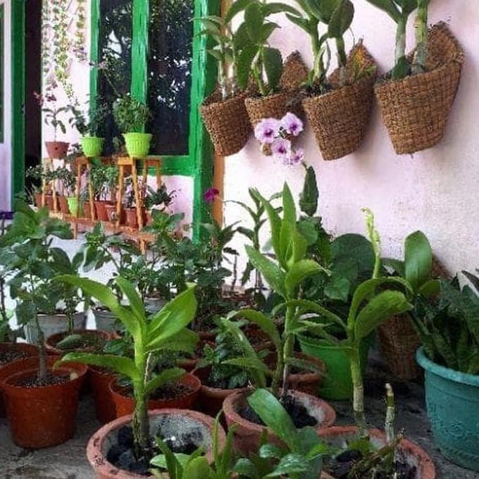 Jual Pot Anggrek Bunga Gantung Bonsai Pot Sabut Serabut Kelapa
