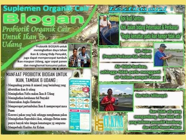 Jual Probiotik Biogan Untuk Budidaya Ikan Gurame Agar Cepat Besar Dan Panen Kab Bandung Sakararoy1 Tokopedia