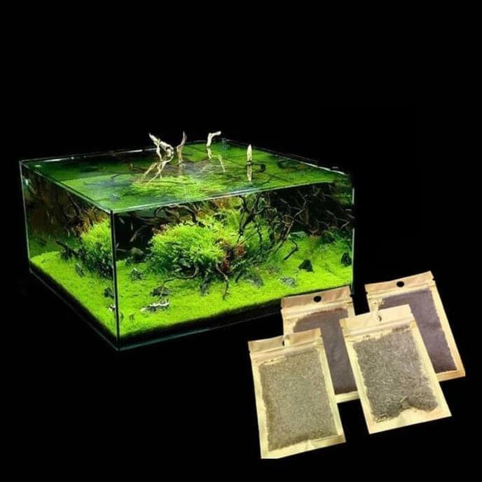 Jual Bibit Aquascape Carpet Seed Dapat 6 Jenis Bibit Jaminan Kualitas Kab Madiun Winner 19 Tokopedia