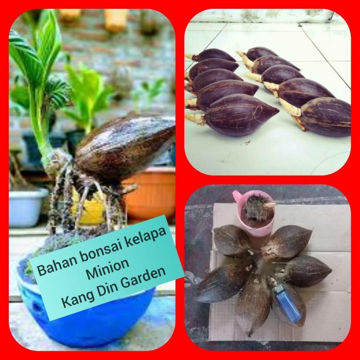 Jual Bonsai Kelapa Minion Bahan Kota Metro Kang Din Garden