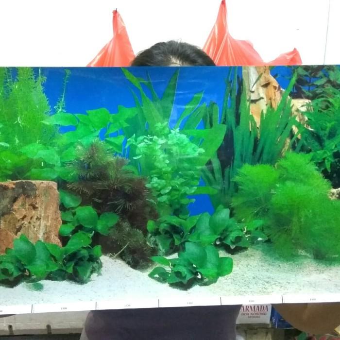 Jual Wallpaper Aquarium Gambar Belakang Aquascape Tinggi 40cm Jakarta Barat Almarhum13 Tokopedia