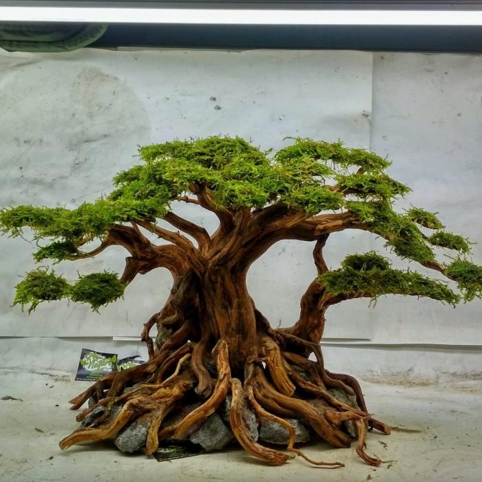 Jual bonsai aquascape ZX09 - Kota Depok - aquanatureart ...