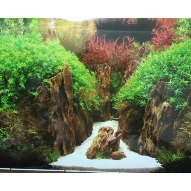 Jual Wallpaper Background Aquarium Aquascape 30cm Per Roll 15m Termurah Jakarta Barat Olastore1 Tokopedia