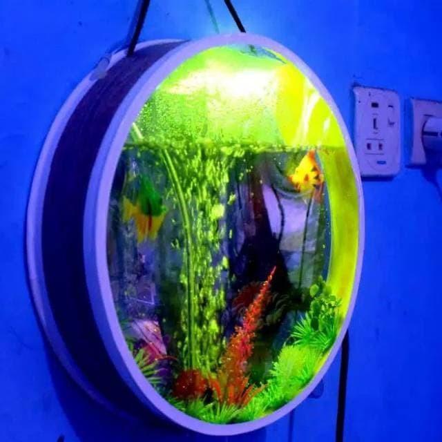 Jual Aquarium Mini Bisa Dipasang Di Dinding Dengan Lampu Led Kab Bogor 081259982093 Tokopedia