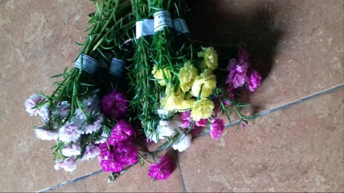 Jual Bunga Cantik Manis Pukul 9 Krokot All 40 Warna Kab Bantul