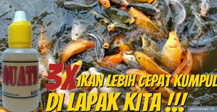 Jual Aquatic Essen Oplosan Ikan Mas Kilo Gebrus Jakarta Barat Madava Matteo Tokopedia