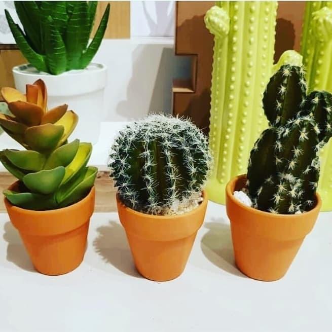 Jual Kaktus Mini Artificial Kaktus Satuan Kota Tangerang Selatan Shoppe Home Accesories Tokopedia