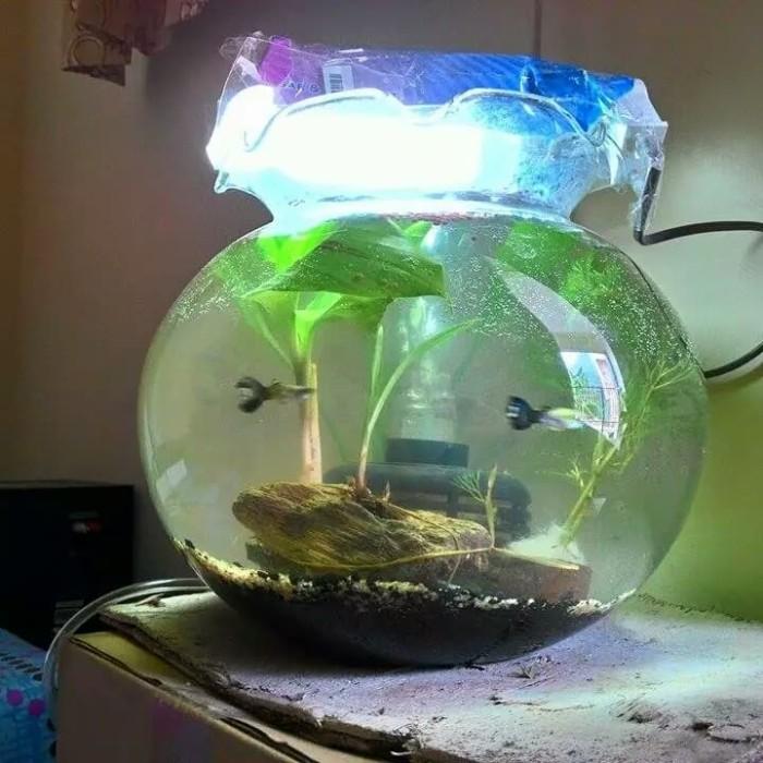 Jual Aquarium Bulat Mini 3 5 Liter Dki Jakarta Frans Aqua Scape Tokopedia