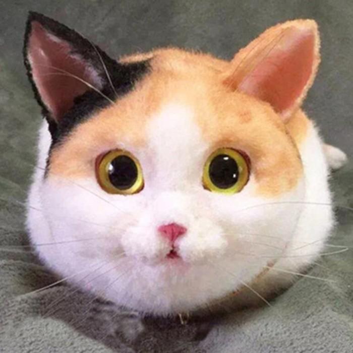 Download 96+  Gambar Kartun Kucing Dari Samping Paling Lucu