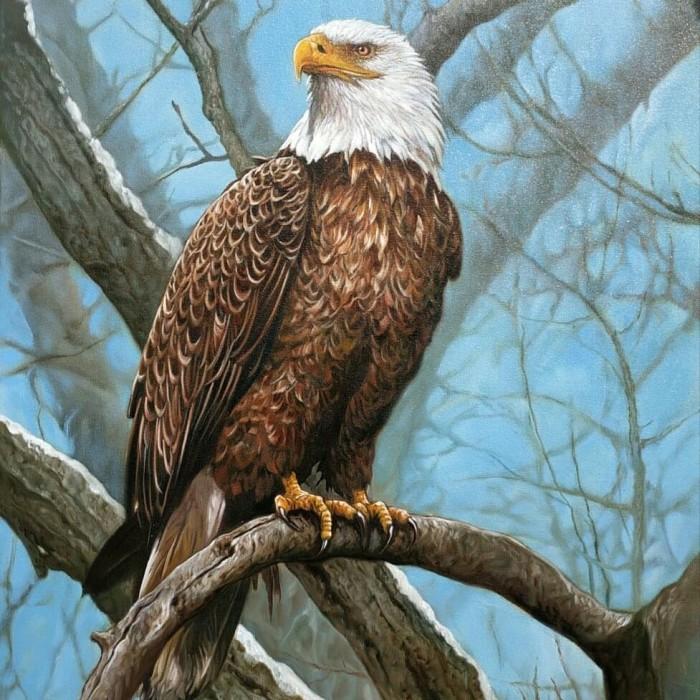 41 Gambar Burung Elang Dari Kain Flanel Terbaru
