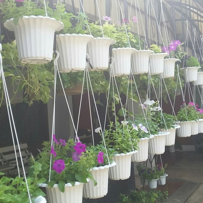 Bunga petunia dalam pot gantung penghias teras rumah