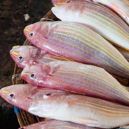 Jual Ikan Kurisi Kerisi Jakarta Utara Ikan Segar Laut Hwr Tokopedia