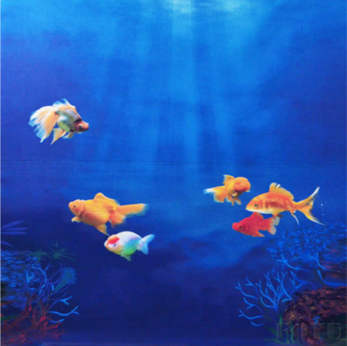 Unduh 72 Koleksi Background Aquarium Ikan Mas Koki Gratis