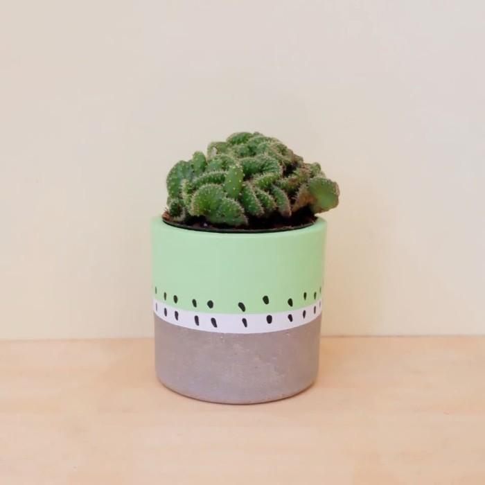 Jual Kaktus Mini Cek Harga Di Pricearea Com