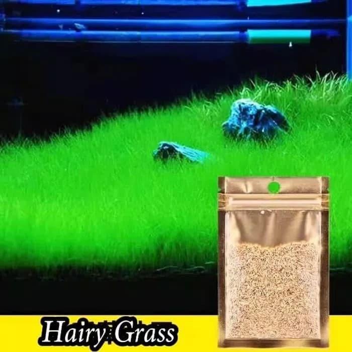 Jual Bibit Benih Hair Grass Seed Tanaman Carpet Aquascape Kota Depok Fandho Aquarium Tokopedia