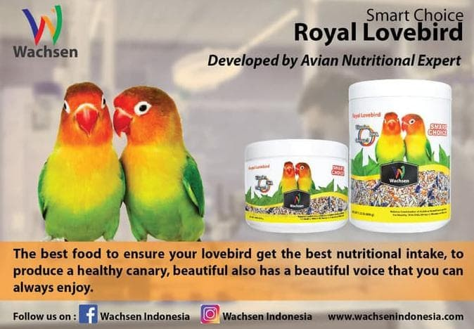 Jual New Makanan Burung Lovebird Smart Choice Royal Lovebird Berkualitas Kota Bogor Andrihasra55 Store Tokopedia
