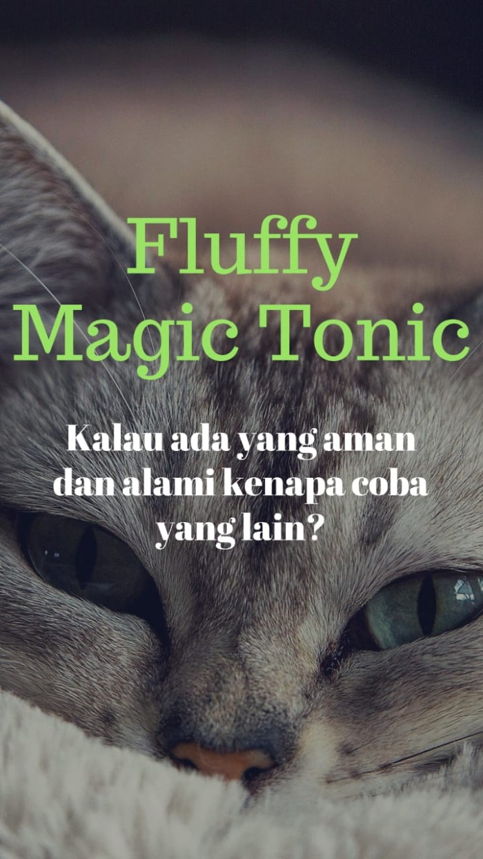 Jual Anti Kutu Kucing Abyssinian Asli - Kota Bandung - Fluffy Care Official    Tokopedia