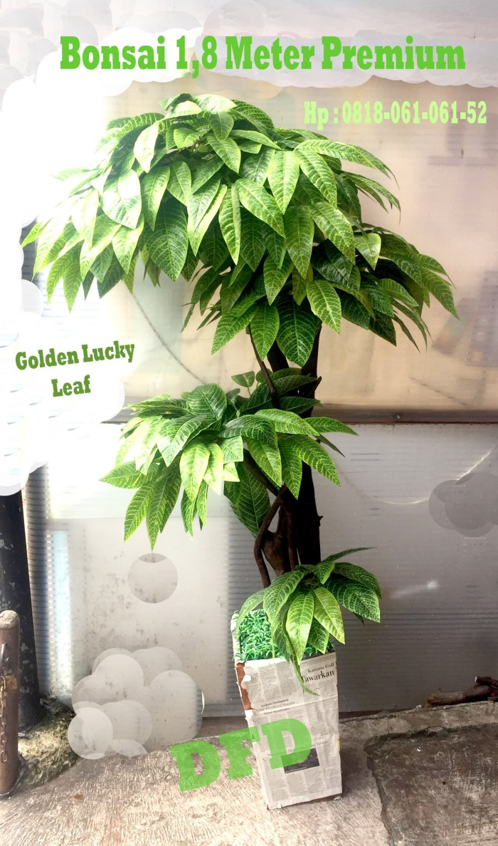 Jual Pohon Daun Golden Lucky 180 Cm Pohon Plastik Bonsai Artifisial Jakarta Barat DFD