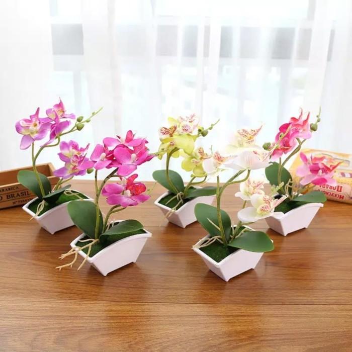 Desain Taman Anggrek Minimalis  jual bunga anggrek daun sutra berkualitas vas minimalis kota bekasi dimora tokopedia