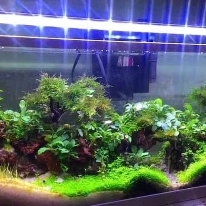 Harga Lampu Aquarium Katalog.or.id