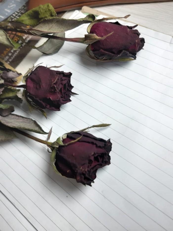 Gambar Bunga Mawar Layu 3d Koleksi Gambar Bunga