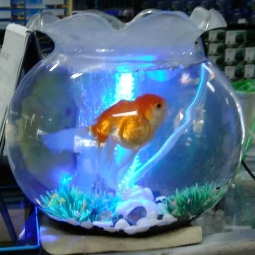 Jual Aquarium Bulat Dan Toples Kapasitas 3 7l Kota Bekasi Rizkycheraaquarium Tokopedia