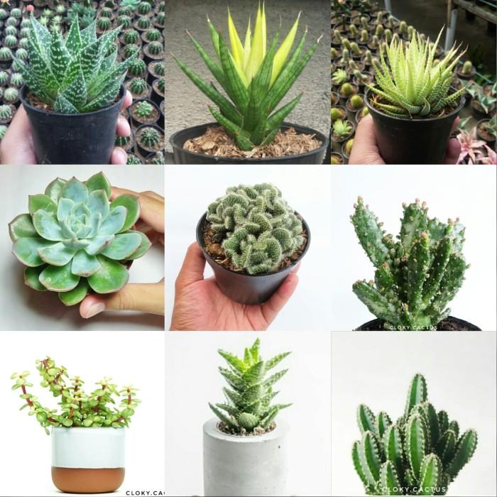 Jual Paket Bundle Pot Kaktus Mini Floral Lucu Cloky Cactus Kota Magelang Cloky Cactus Os Tokopedia