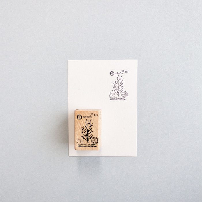 Foto Produk Botanical Series Rubber Stamp: Ephedra dari gudily