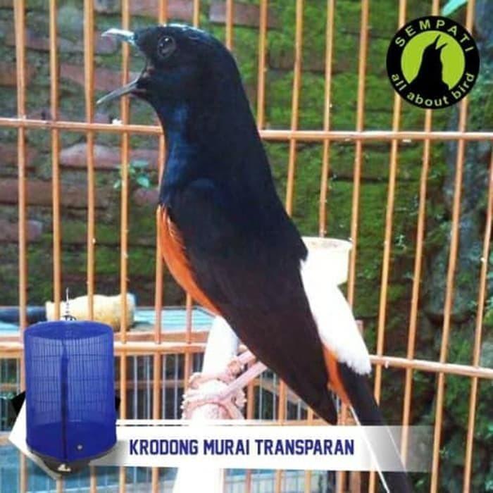Jual Paling Laris Krodong Sangkar Burung Murai Transparan No 1 2 3 Bandung Jakarta Barat Wisnuiswahyudi Tokopedia