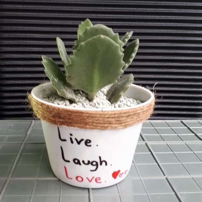 jual secculent kaktus hias quote q jakarta barat a design