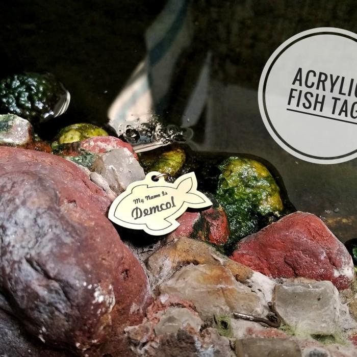 harga Cat tag / name tag kucing / tag kucing acrylic 2 sisi Tokopedia.com