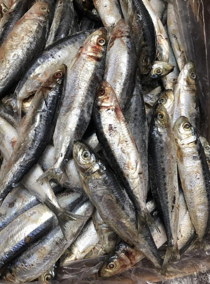 Jual Produk Unggulan Ikan Giling Cat Food Raw Food Makanan Kucing