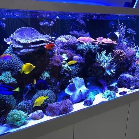 Jual 150cm Reef Tank Lampu Aquascape Kab Kulon Progo Dn Tronic Aquascape Tokopedia