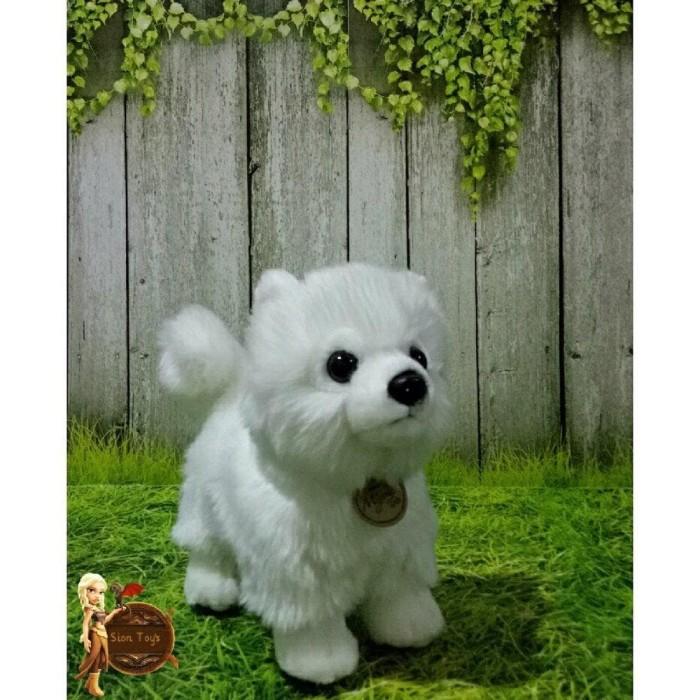 46++ Anjing pomeranian putih terbaru