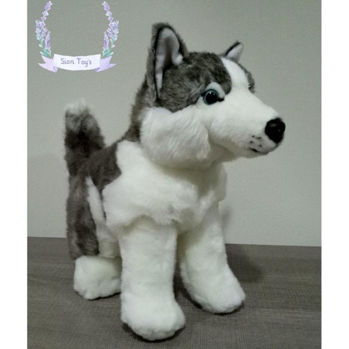 30++ Anjing siberian husky warna putih terbaru