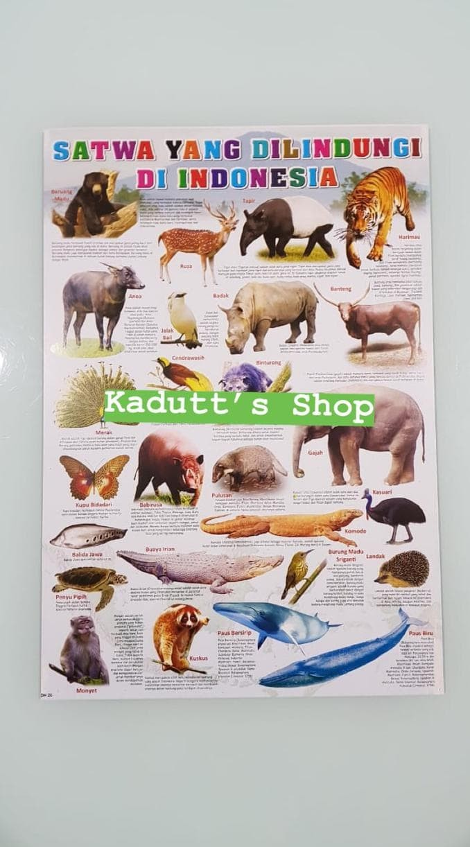 Jual Poster Edukasi Hewan Binatang Langka Dilindungi Animal Mainan Murah Jakarta Barat Fibrianfikri